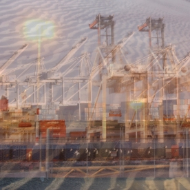 shipyard seagulls
