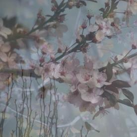 spring blossom song